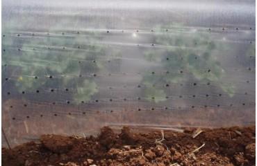 Θερμικά Φύλλα Χαμηλής Κάλυψης Καλλιεργειών