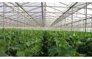 Φύλλα Θερμοκηπίου: Οδηγίες Χρήσης κ' Τοποθέτησης